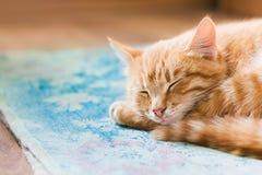 Gato joven rojo cercano de Tabby Mixed Breed Short-Haired Domestic, Sle Imagen de archivo