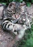 Gato juguetón Imagen de archivo