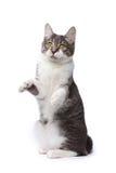 Gato juguetón Foto de archivo libre de regalías