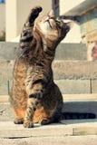Gato juguetón Fotografía de archivo libre de regalías