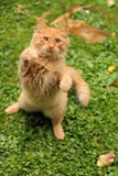 Gato juguetón Imagenes de archivo