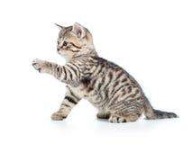 Gato juguetón del gatito aislado en blanco Imágenes de archivo libres de regalías