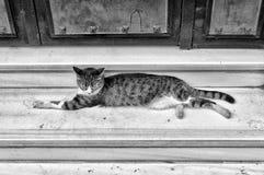 Gato largo Fotografía de archivo