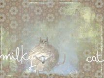 Gato leitoso Foto de Stock