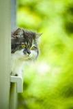 Gato lindo. Imagen de archivo libre de regalías