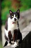 Gato lindo Fotos de archivo libres de regalías
