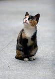 Gato lindo Imágenes de archivo libres de regalías
