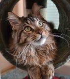 Gato lindo Fotos de archivo