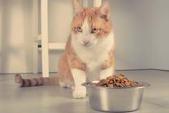 Gato lindo alrededor a comer Imagen de archivo