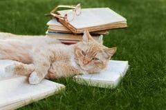 Gato lindo con el libro y los vidrios que mienten en césped verde Foto de archivo