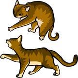 Gato lindo con gris marrón divertido elegante del fure liso ilustración del vector