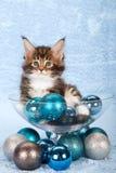 Gato lindo con las bolas de la Navidad Foto de archivo