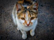 Gato lindo de la calle Fotografía de archivo