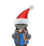 Gato lindo de santa con el regalo del Año Nuevo Fotos de archivo libres de regalías