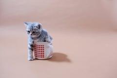 Gato lindo del bebé Foto de archivo