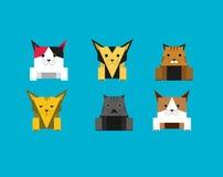 Gato lindo del cubo Fotografía de archivo libre de regalías