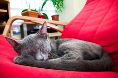 Gato lindo el dormir Imagen de archivo