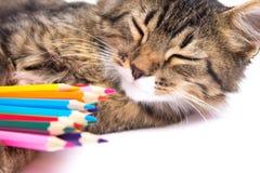 gato lindo el dormir con los lápices coloreados Fotografía de archivo libre de regalías