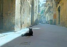 Gato lindo en calle vieja Foto de archivo