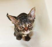 Gato lindo en cuarto de baño Fotografía de archivo
