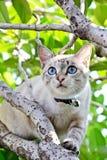 Gato lindo en el árbol Fotografía de archivo
