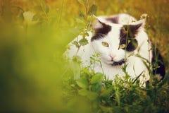 Gato lindo en la hierba Imágenes de archivo libres de regalías
