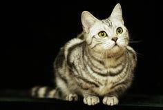 Gato lindo en la obscuridad imagenes de archivo
