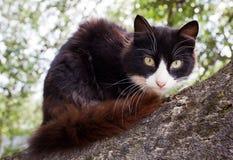 Gato lindo encima de un árbol Foto de archivo libre de regalías