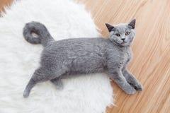 Gato lindo joven que juega en la piel blanca imágenes de archivo libres de regalías