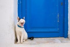 Gato lindo nacional soñoliento que se sienta cerca de la puerta azul tradicional en la isla de Paros, Cícladas imagen de archivo libre de regalías