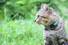 Gato lindo ningún 2 Fotografía de archivo