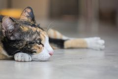 Gato lindo que duerme en la tierra foto de archivo libre de regalías