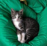 Gato lindo que miente en una almohada verde imágenes de archivo libres de regalías