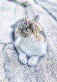 Gato lindo que se sienta en la tierra, foco selectivo Foto de archivo libre de regalías