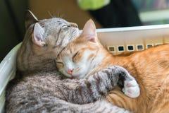 Gato lindo que vive en la caja fotografía de archivo