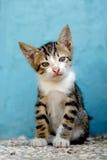 Gato lindo sentado reservado imagen de archivo