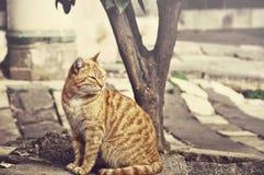 Gato lindo soñoliento fotografía de archivo libre de regalías