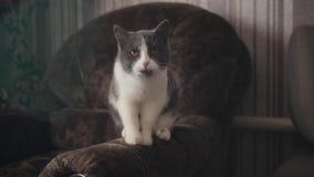 Gato lindo y cariñoso que está sin hacer nada y que mira almacen de metraje de vídeo