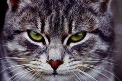 Gato listo para el ataque imagenes de archivo
