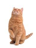Gato listo para saltar Fotos de archivo