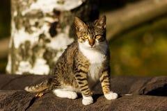 Gato listrado ao ar livre Imagens de Stock Royalty Free