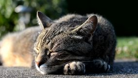 Gato listrado que encontra-se no jardim filme