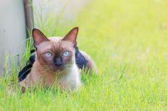 Gato liying en hierba Fotografía de archivo libre de regalías