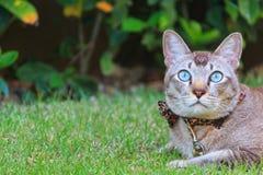 Gato liying en hierba Imagen de archivo libre de regalías