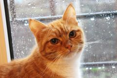 Gato lluvioso Fotos de archivo libres de regalías