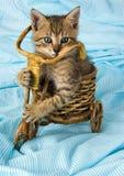 Gato loco Imagen de archivo libre de regalías