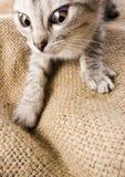 Gato loco foto de archivo libre de regalías
