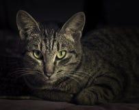 Gato mágico fotografia de stock royalty free