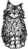 Gato macio Foto de Stock Royalty Free