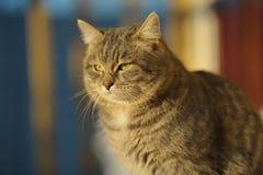 Gato macio Fotos de Stock